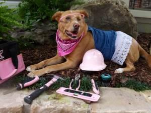 constructiondog