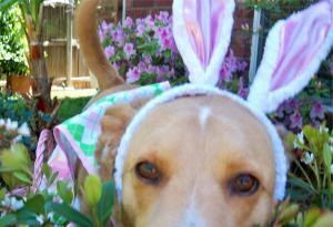 Lilly big bunny