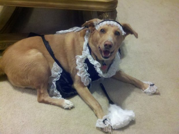 """Lilly was """"MAID"""", for Cleaning!"""