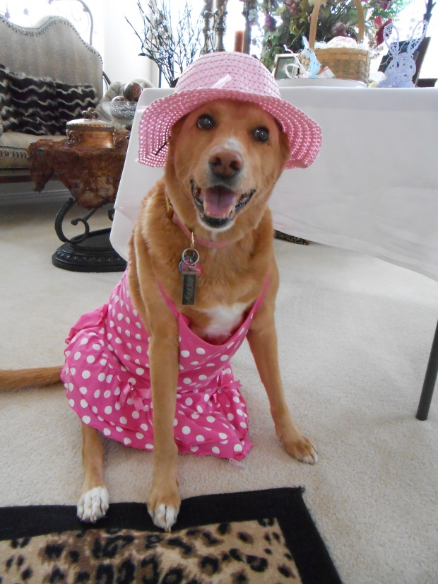 """Being a """"Socialite"""", has given Lilly the respect that she deserves, in the Dallas Community!"""