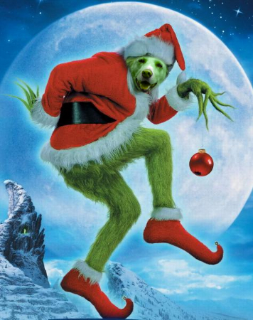 Lilly grinch