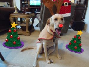 Madison Reindeer nose