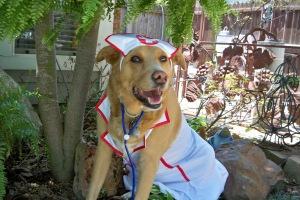 Lilly_Nurse_Happy-1