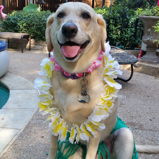 Madison LUAU best